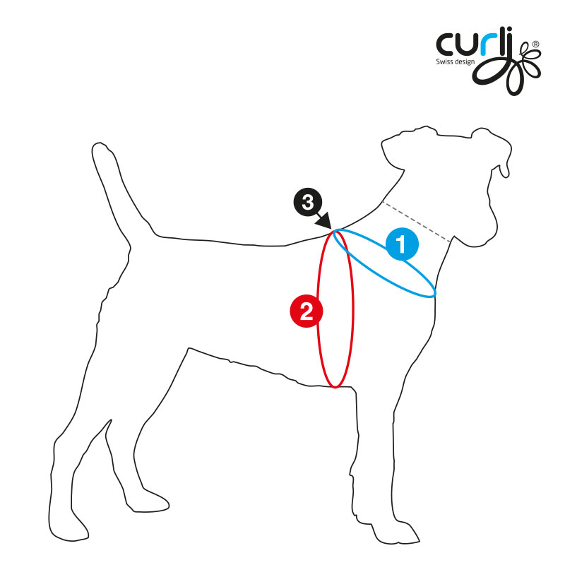 Dog-sizechart-illustration-for-curli-Har